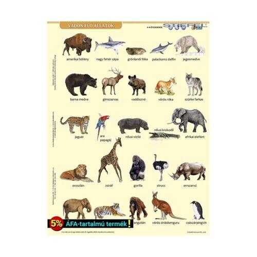 Tanulói munkalap STIEFEL A/4 vadon élő állatok + munkaoldal