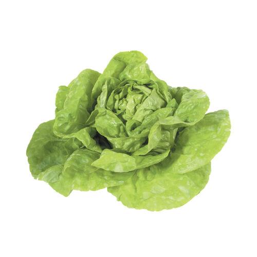 Saláta fejes /db
